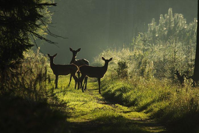 Большая подборка красивых фотографий с животными.