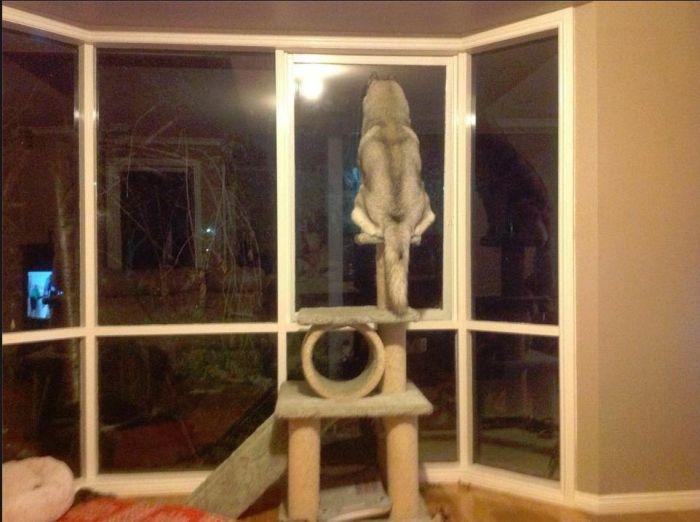 Фото прикол в окно, кот, питомец, смотрит