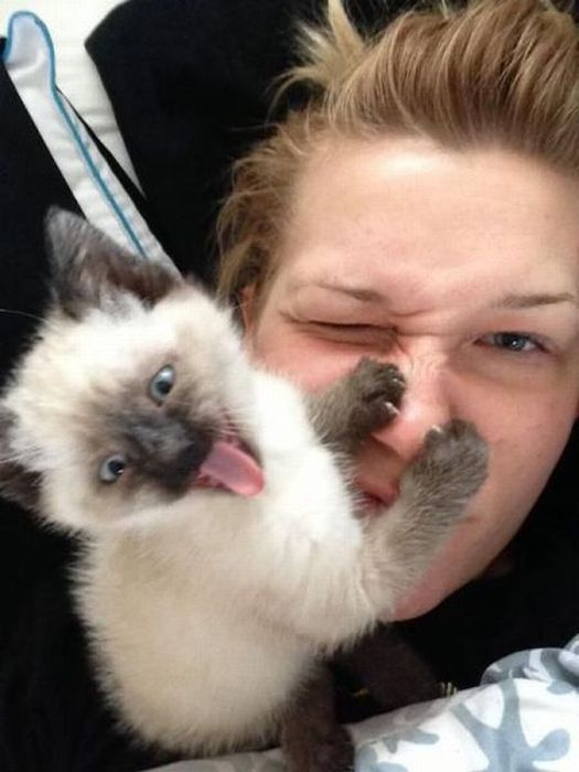 Бугагашеньки выражение лица, котенок, лицо, схватил