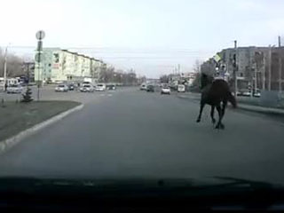 Конь на дороге