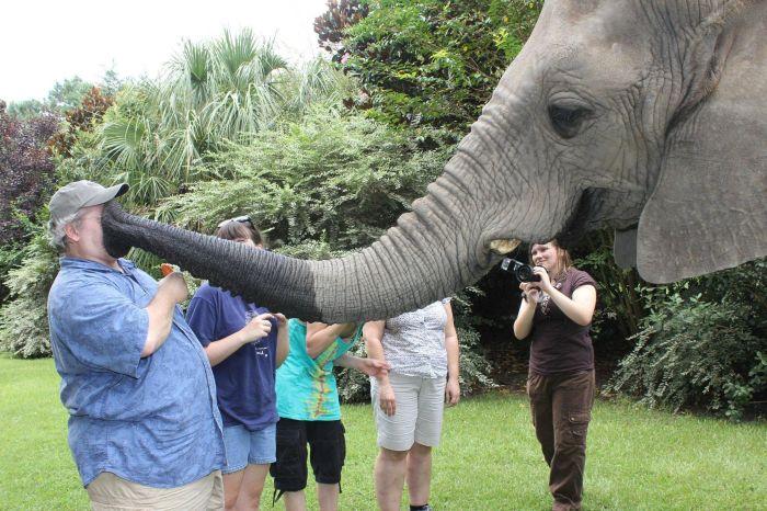 Юмор за лицо, прикол, слон, хобот