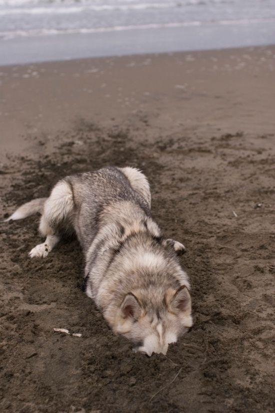 Фотоподборка песок, пляж, прикол, собака