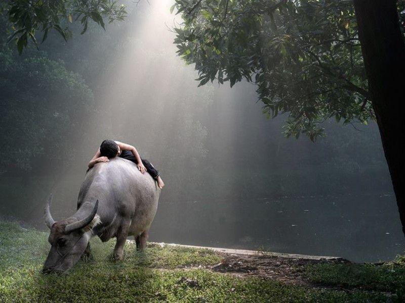 Фото онлайн буйвол, красивое фото, природа, ребенок