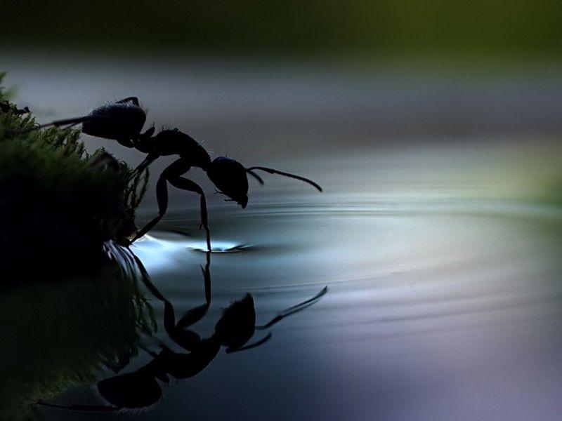 Юмор вода, красота, макросъёмка, муравей