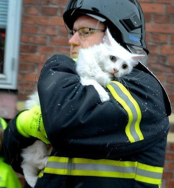 Свежий фотоприкол выражение лица, кот, пожарный, спасатель