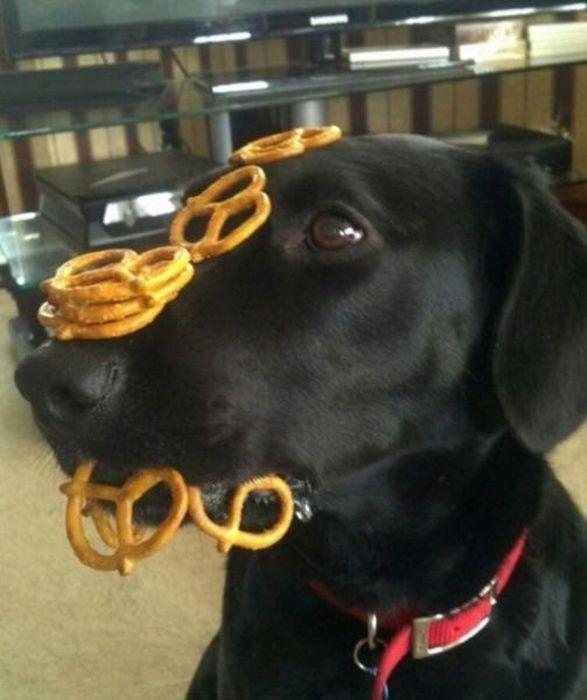 Юмор крендель, печенье, собака