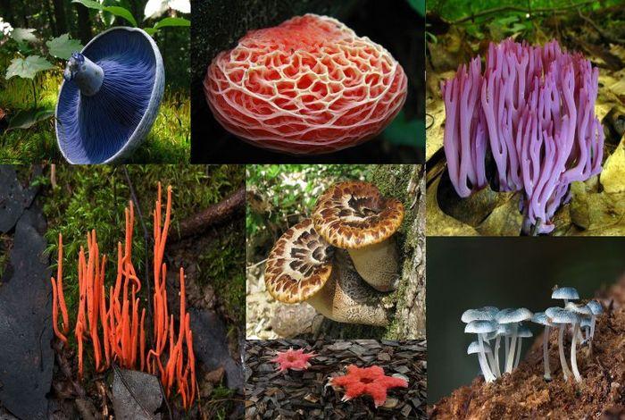 гриб, мир, планета, вид