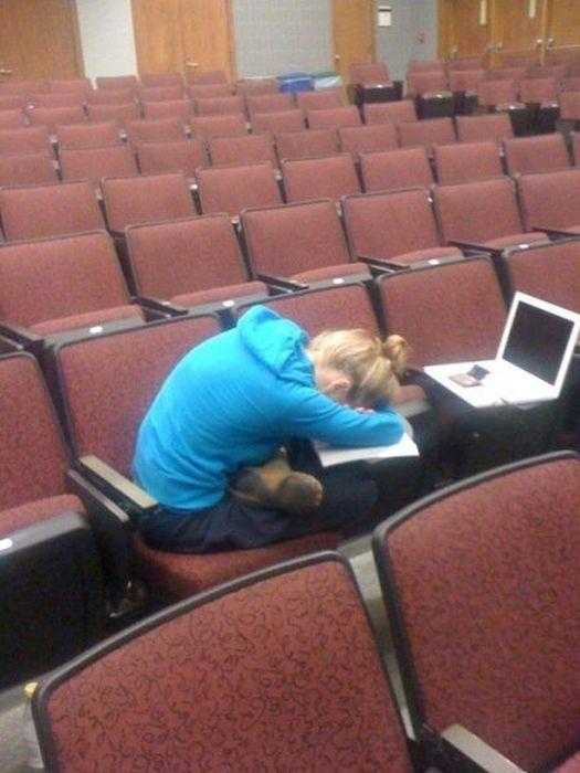 Фанни фото девушка, заснула, ноутбук, прикол