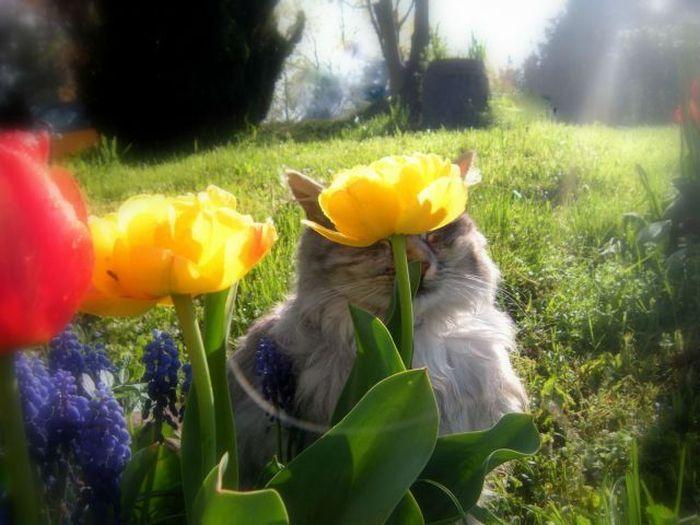 Прикол кошка, лужайка, природа, цветок
