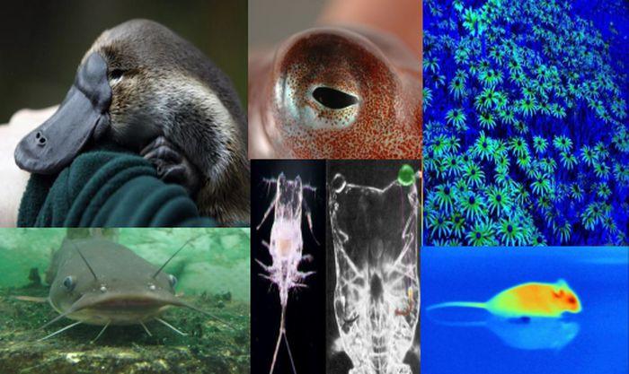 органы чувств,  мир, животные, люди, ощущение