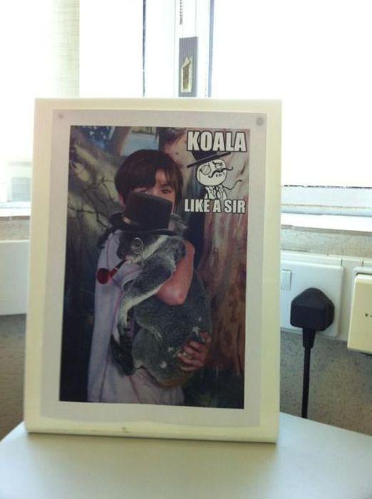 Фотоприкол бесплатно коала, медведь, прикол, фото с животным