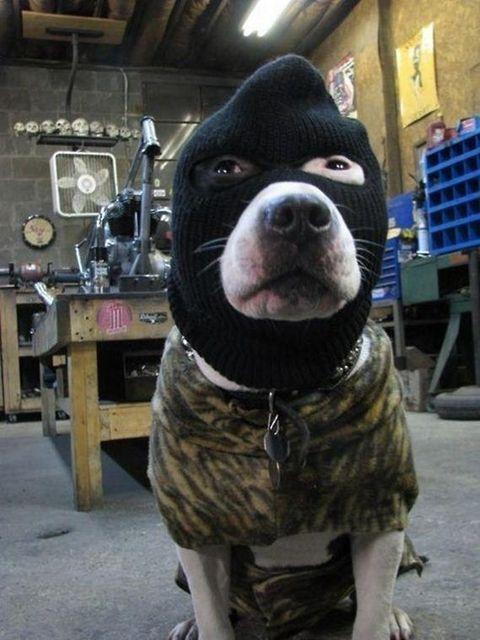 Бугагашеньки маска, нарядил пса, собака
