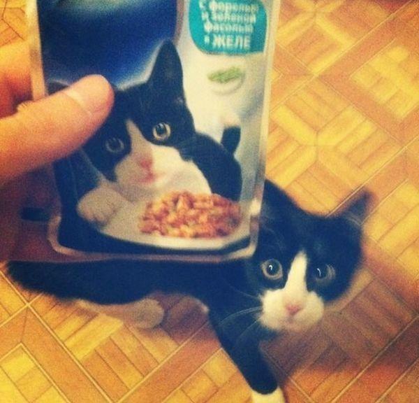 Юмор еда, котейка, одно лицо, похож