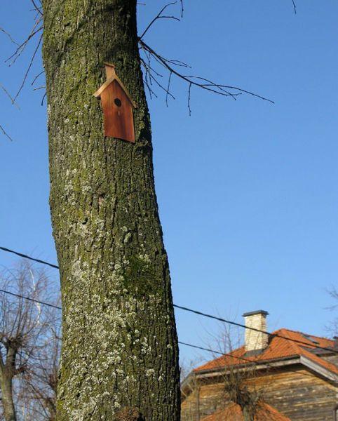 Юмор дерево, обман, скворечник