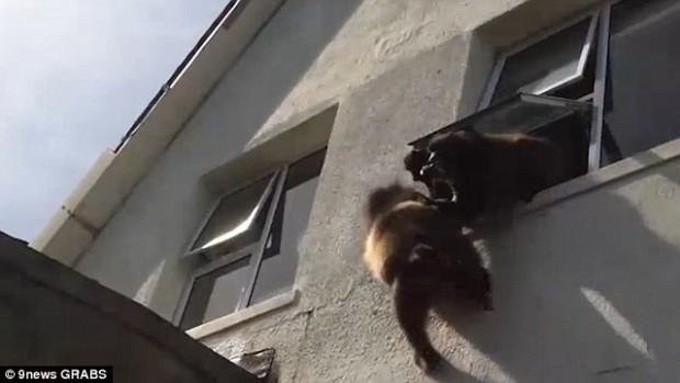 животные, курьезы, обезьяна,