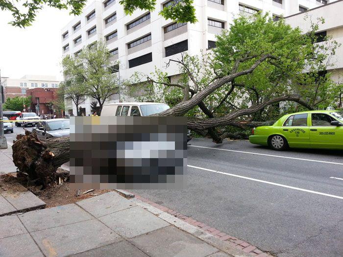 авария, авто, bmw m5 f10, дерево упало,