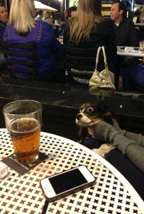 Отпадные фотки бокал пива, выражение лица, собака