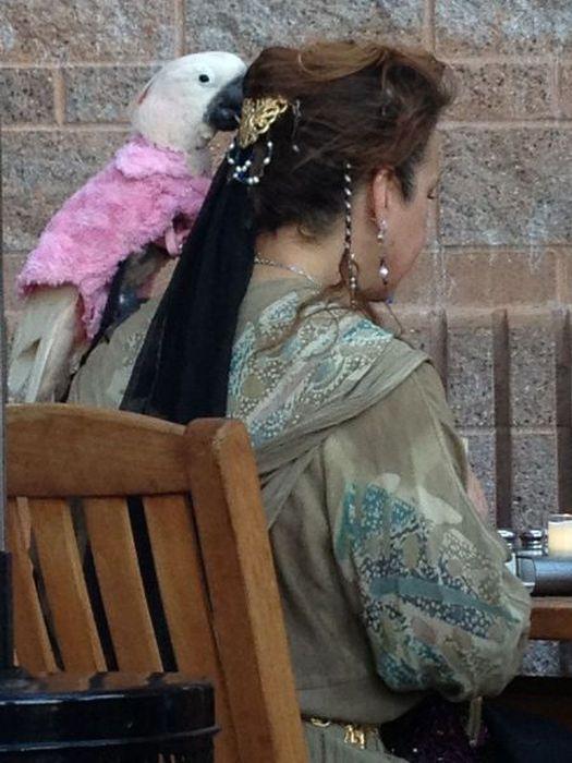 Прикол женщина, костюм, питомец, попугай