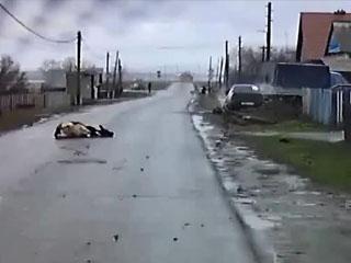 Буренка на дороге