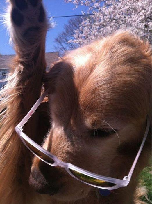 Фотоприкол фото нарядили, очки, прикол, собака