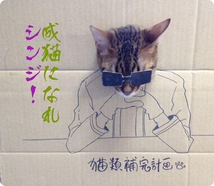 кот, хобби, позирование