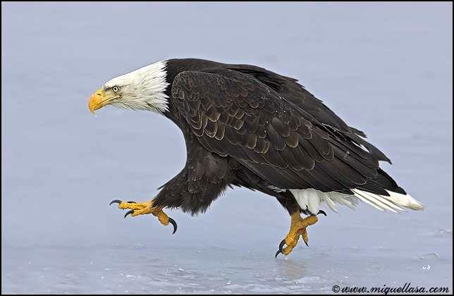 Красивые фото птиц в движении (13 фото)