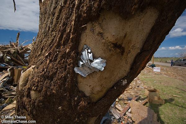 дерево пробитое соломинкой фото эса