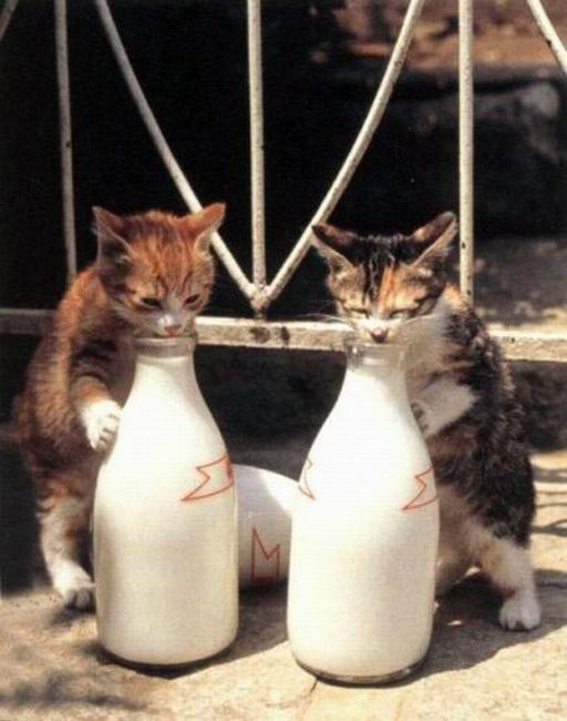 Смешные стоп-кадры с животными (186 фото)