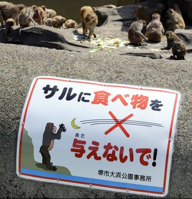 LÜtfen hayvanlara yİyecek atmayiniz =) 001_fatmonkey