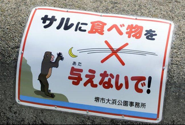 LÜtfen hayvanlara yİyecek atmayiniz =) Tn