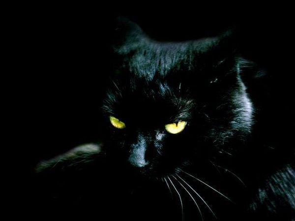 Чёрные животные (13 фото)