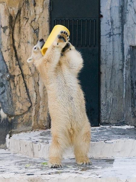Веселый медведь (6 фото)