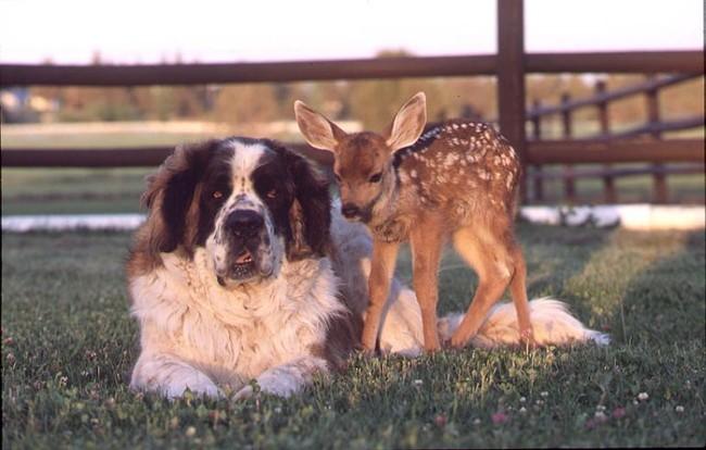 Необычные друзья (34 фото)