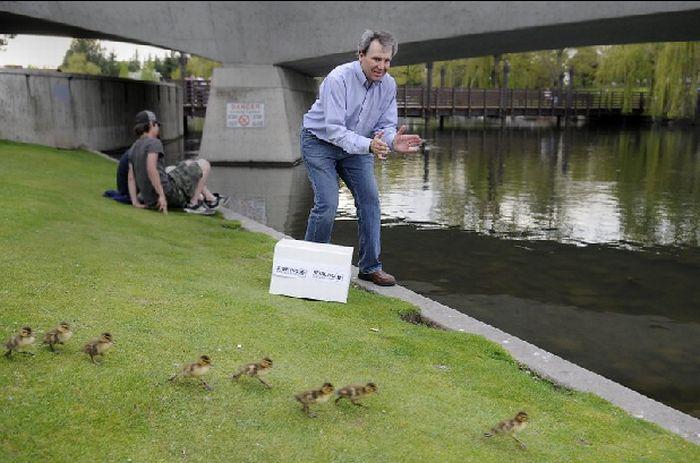 duck91