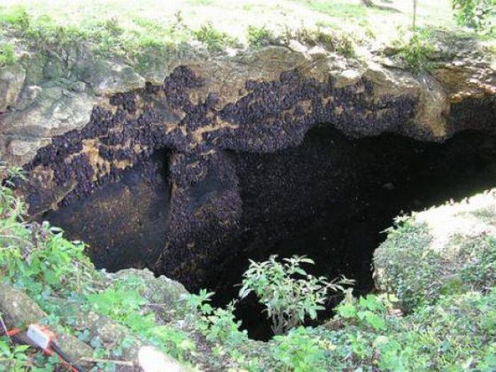 Пещера летучих мышей (12 фото)