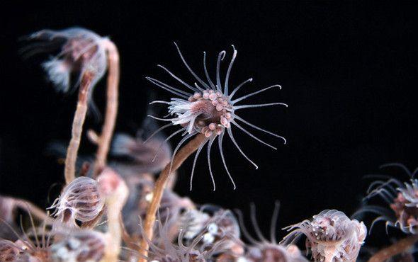 Космос подводного мира (13 фото)