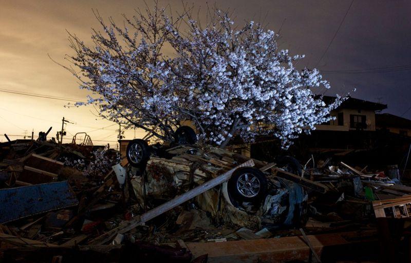1151 990x636 Катастрофа в Японии: два месяца спустя