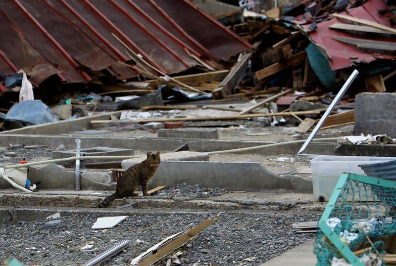 2920 990x667 Катастрофа в Японии: два месяца спустя