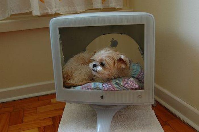 Креативные домики для животных в старых мониторах (9 Фото)