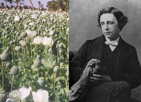 Льюис Кэрролл — опиум<br/>Во времена Кэрролла опиум называли Лауданум (Laudanum), и многие люди принимали эту спиртовую опийную настойку даже при легких недомоганиях, к примеру, при головных болях. Не удивительно, что у них возникала зависимость. Не избежал этой участи и английский писатель Чарльз Лютвидж Доджсон, более известный как Льюис Кэрролл. Он страдал от очень сильных мигреней. Поэтому многие считали, что Льюис принимал лауданум, так как он облегчал боль. Более того, с раннего детства писатель страдал от заикания, что очень сильно беспокоило его. Наркотик «помогал» Кэрроллу справиться с этим комплексом, успокаивал его и в тоже время придавал уверенности. Какой бы ни была истинная причина, одно можно сказать с точно: Кэрролл находился под воздействием наркотика. Достаточно только почитать его «Алису в стране чудес».