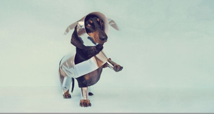 Классные фотографии для любителей собак (14 Фото)