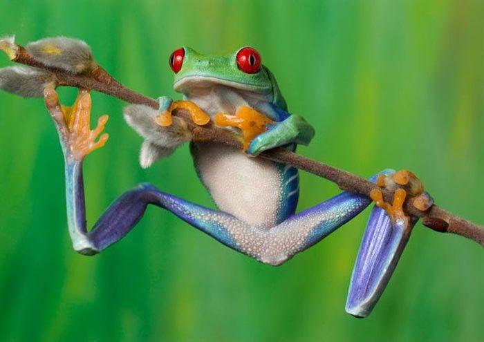 Разноцветные лягушки (15 фото)