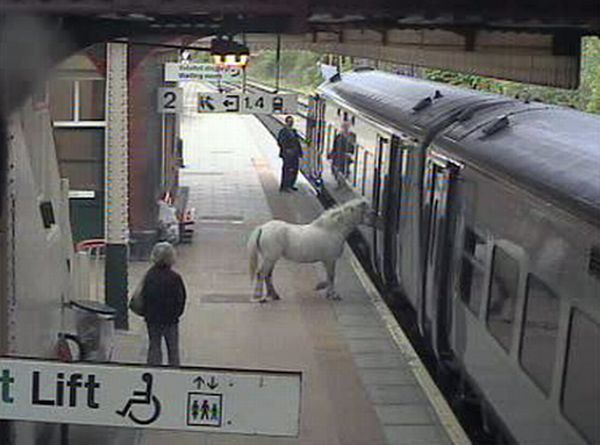 Лошадке не продали билет (6 фото)