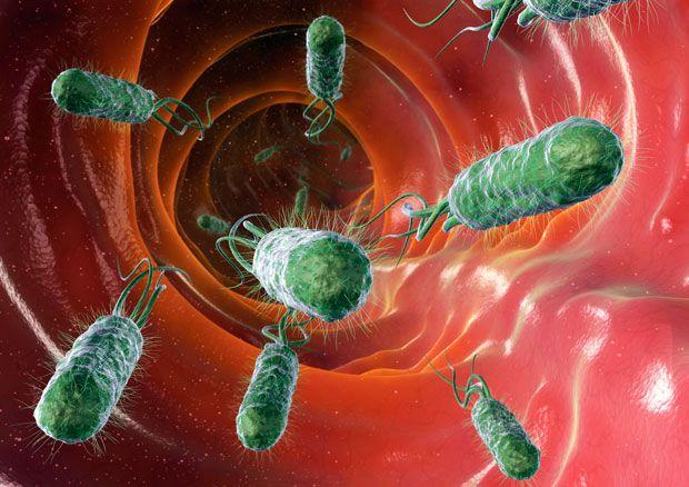 """4. Тот факт, что мы состоим преимущественно из разных бактерий, может вызвать тревогу, но д-р Слитордал понять, что бактерии действуют нам на благо – и без них мы бы не выжили. """"Это бактериально-человеческое взаимодействие по большей части является симбиотическим. В обмен на продовольствие и питание, бактерии помогают нам с пищеварением, образованием витаминов и способствуют укреплению нашей иммунной системы Кроме того, они защищают нас от патогенных инфекций – так называемых «плохих бактерий"""", рассказывает он.  Компьютерное изображение бактерий кишечной палочки внутри кишечника. Они могут вызывать бактериальную диарею."""