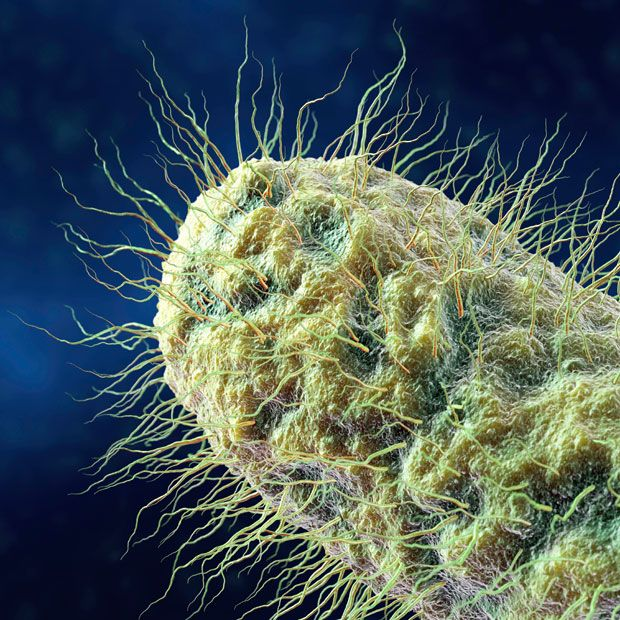 6. Ресничная палочковидная бактерия. Типичные палочковидные бактерии включают кишечную палочку и сальмонеллы.