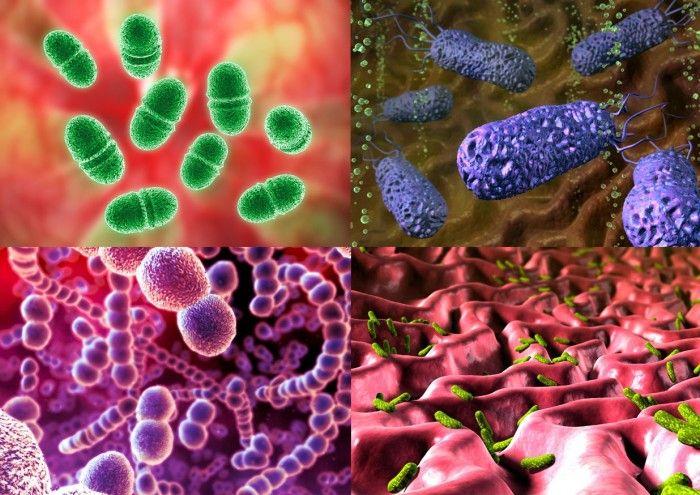 Бактерии под микроскопом (13 фото)