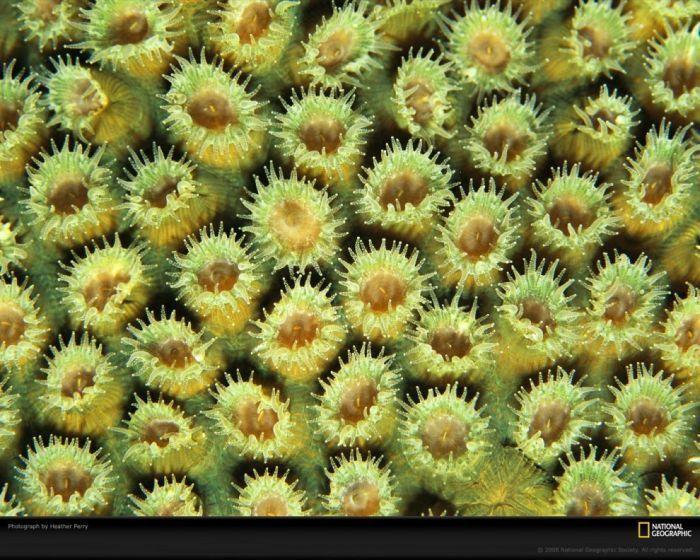 Кораллы фантастической красоты (10 Фото)