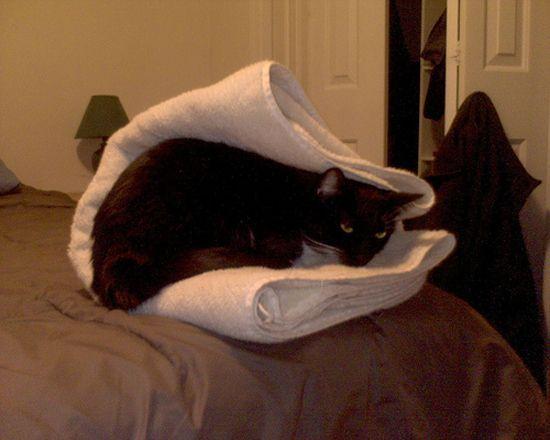 фото ухмылка кота