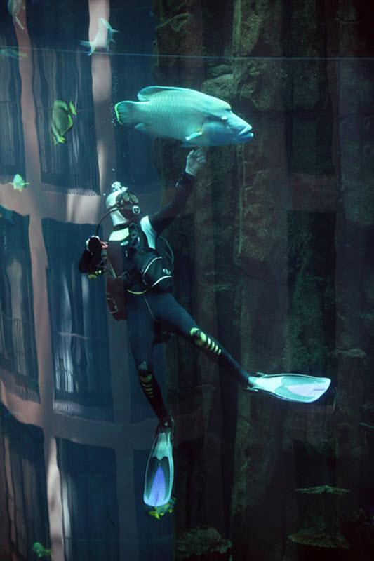 Порно видео чистят аквариум
