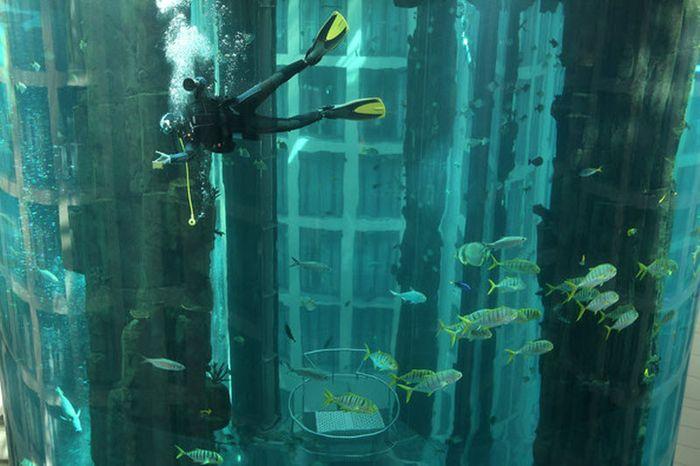 Аквариум AquaDom в Берлине (11 фото)